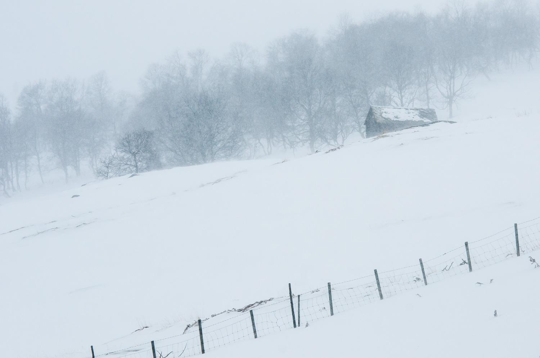 Vang i Norge. Sneen i sig selv medvirker til ro i billedet, og snestormen, der slører detaljerne med den fygende sne, gør det hele endnu mere minimalistisk. Grej: Nikon D300s + Nikkor 70-200 f/2.8 VRII. Indstillinger: 1/500 sek., f/8, ISO-200, 150mm.