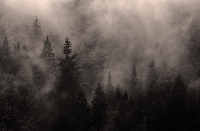 Meget typisk for min tilgang til landskabsfoto. Et snapshot fra en rasteplads et eller andet sted i Sydnorge. Grej: Nikon D300s + Nikkor 70-200 f/2.8 VRII. Indstillinger: 1/640 sek., f/6.3, ISO-200, 155mm.