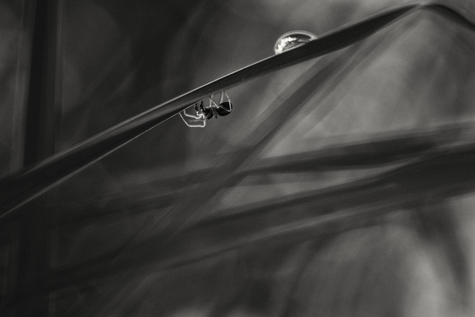 """Førsteplads i kategorien """"Insekter og spindlere"""". Fotograferet med et Olympus E-M5 MKI købt brugt for 2000kr. og et gammeltZeiss Jena 50mm. objektiv. (Foto: Carsten Krog Pedersen)."""