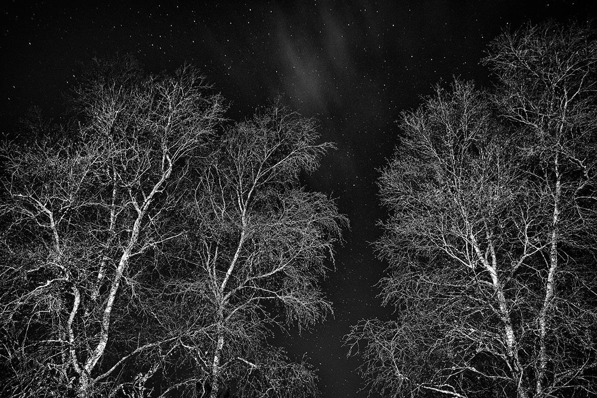 De lyse birkestammer er virkelig spændende fotograferet på denne måde, synes jeg. Manner det skal jeg lave meget mere af!!!