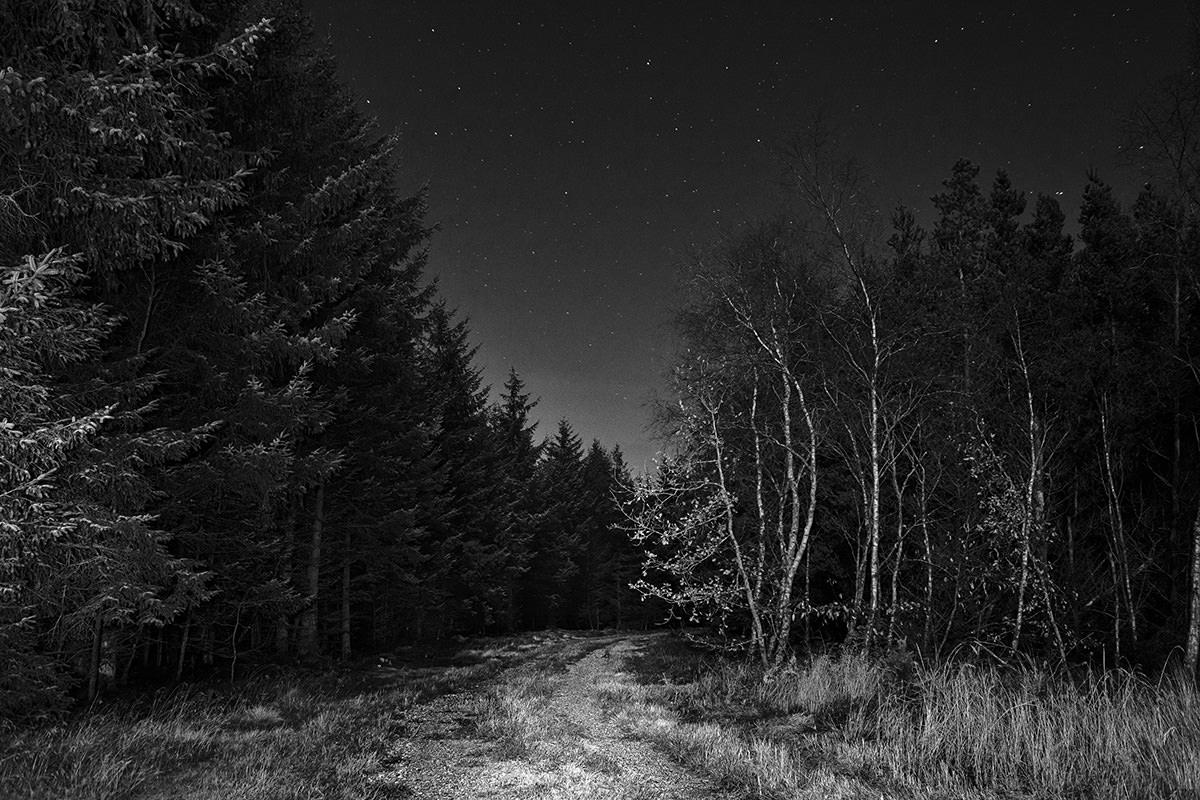 Her fik grusvejen, der fører ind i skovens mørke, et par sekunders længere belysning med lygten.